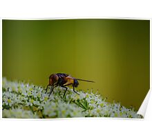Fly on White Flower Poster