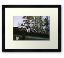 Rooftop adventures with Zelda Framed Print