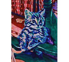 Blue Cat Photographic Print