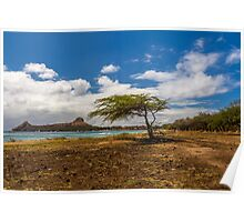 Tree & Pigeon island Poster