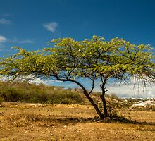 Tree by LacoHubaty