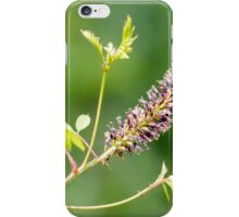 Amorpha fruticosa Flower iPhone Case/Skin
