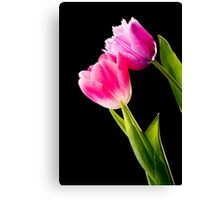 Pink and Red Tulips on Black Background Canvas Print