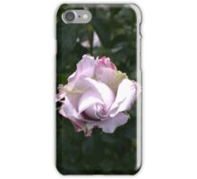 Lavender Rose Bloom iPhone Case/Skin