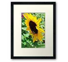 Buzzing for Sunflowers Framed Print