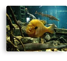 """May Not be a Trophy Large Mouth Bass, BUT I GOT YOUR ATTENTION!""... prints and products Canvas Print"
