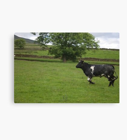 The Charging Cow Canvas Print