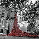Weeping Window of Poppies by David Alexander Elder