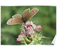 Ringlet Butterfly Poster