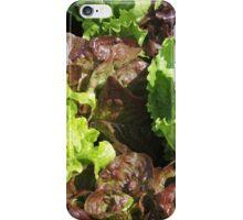 Vegetable Garden: Lettuce Galore iPhone Case/Skin