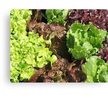 Vegetable Garden: Lettuce Galore Canvas Print