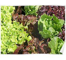 Vegetable Garden: Lettuce Galore Poster