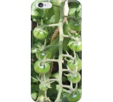 Vegetable Garden: Tomatoes iPhone Case/Skin