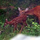 Doe & Fawn Love! by Stacey Lazarus