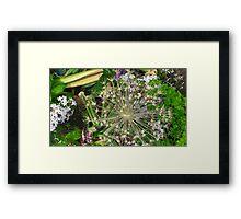 Nature's Beauty: Flowery Fireworks Framed Print