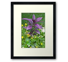 Nature's Beauty: Reaching For The Sky Framed Print