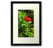 Nature's Beauty: A Splash of Red Framed Print