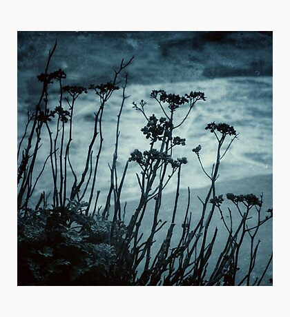 Midnight Dreams of the Sea Photographic Print