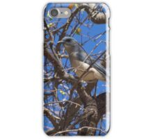 Mexican Blue Jay iPhone Case/Skin