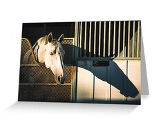 Equine Shadow - Palos Verdes Estates, CA Greeting Card