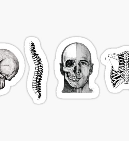 Human Anatomy Illustrations Sticker