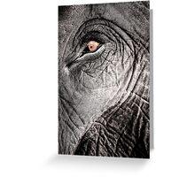 Elephant Eye - Pinnawela, Sri Lanka Greeting Card