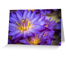 Floral Attraction - Kandy, Sri Lanka Greeting Card