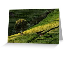 Tree and Tea - Hatton, Sri Lanka Greeting Card