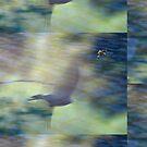 Lake Mary Birds by Mark Wade