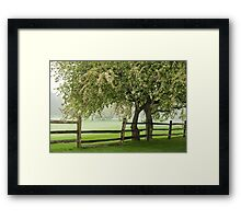 The rainy spring day Framed Print