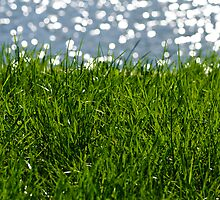 Green grass by Stanciuc