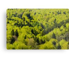 Forest background Metal Print