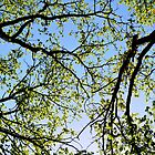Tree foliage by Stanciuc