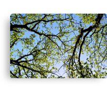 Tree foliage Canvas Print