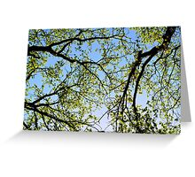 Tree foliage Greeting Card