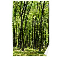 Forest background Poster