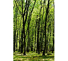 Forest background Photographic Print