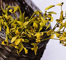 Dried mistletoe in a wooden basket by Stanciuc