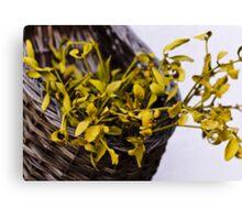 Dried mistletoe in a wooden basket Canvas Print