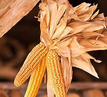 Dried corn cobs by Stanciuc