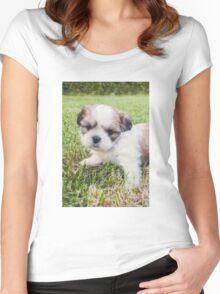 Shitzu Dog Women's Fitted Scoop T-Shirt