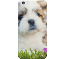 Shitzu Dog iPhone Case/Skin