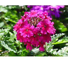 Beautiful pink flower Photographic Print