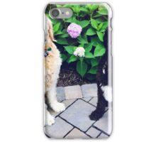 Labradoodle iPhone Case/Skin