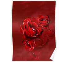 Romantic Red Rose Blossoms Poster