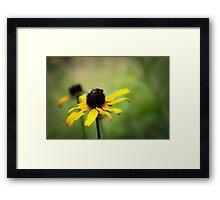 Bee on a Black-eyed Susan Framed Print