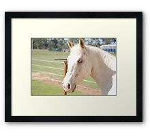 Jedy the horse Framed Print