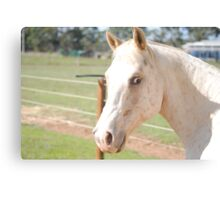 Jedy the horse Canvas Print
