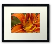 Emperor of the Tiger Lily Framed Print
