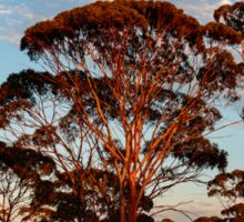 Red Trees, Goldfields WA Australia Sticker